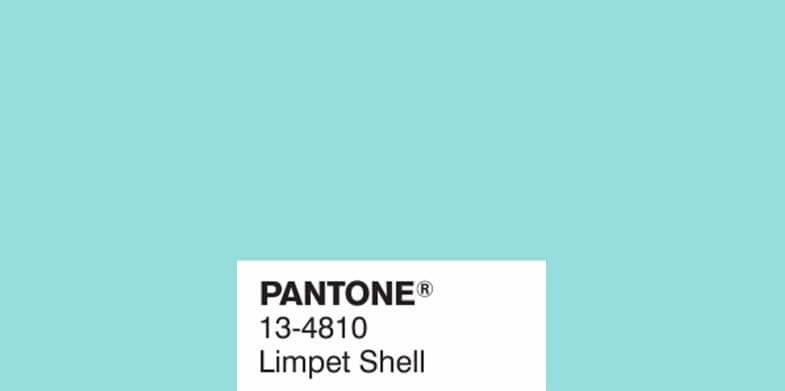 Limpet Shell 13-4810
